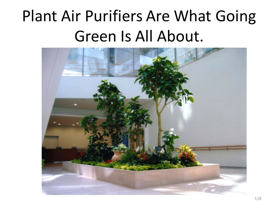 Plant Air Purifiers Are What Going Green Is All About.