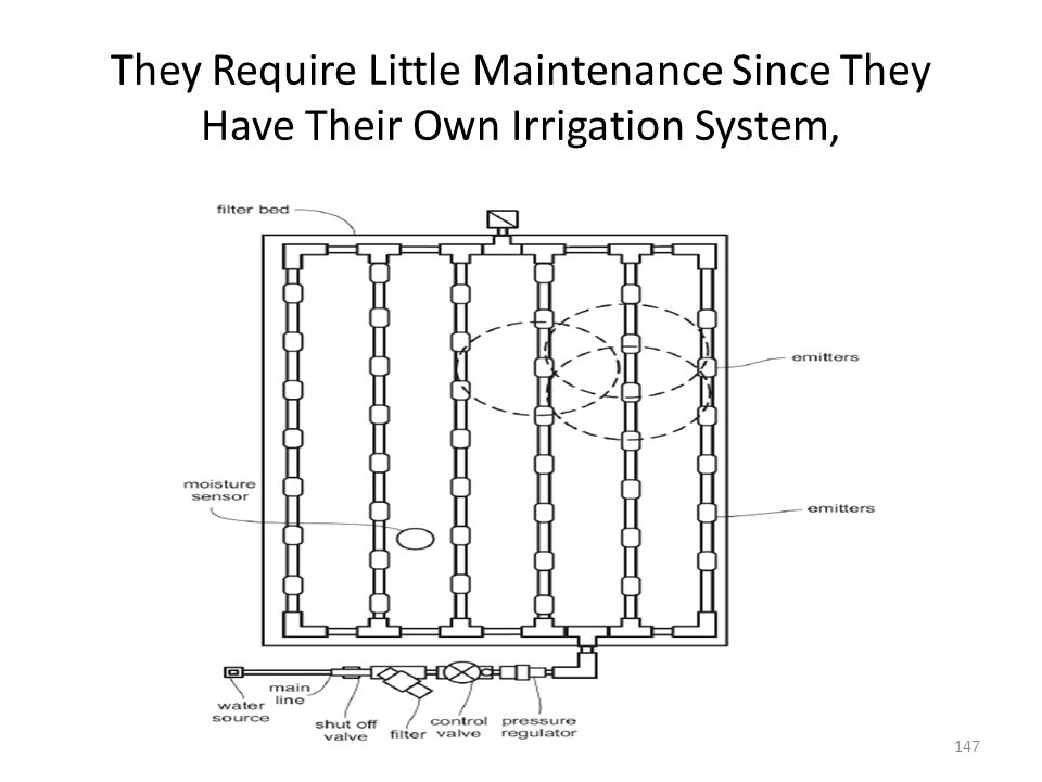 They Require Little Maintenance Since They Have Their Own Irrigation System,