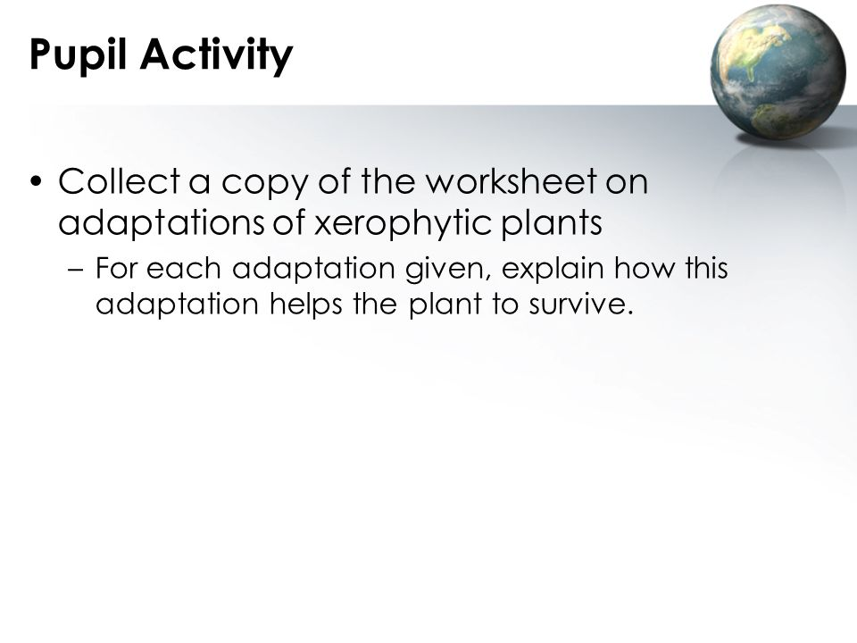 Pupil Activity Collect a copy of the worksheet on adaptations of xerophytic plants.