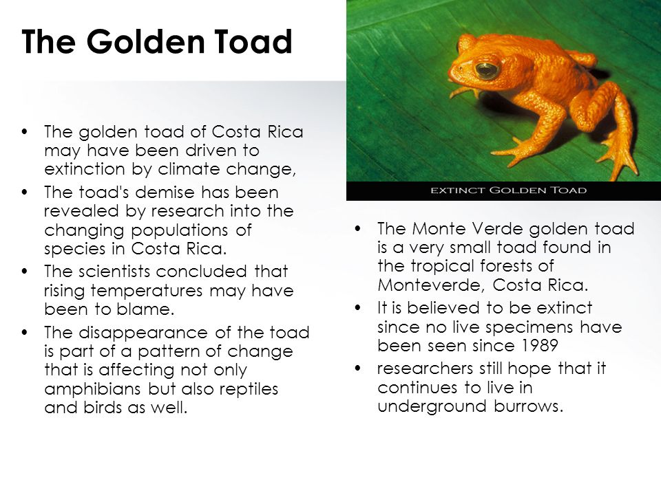 The Golden Toad The golden toad of Costa Rica may have been driven to extinction by climate change,