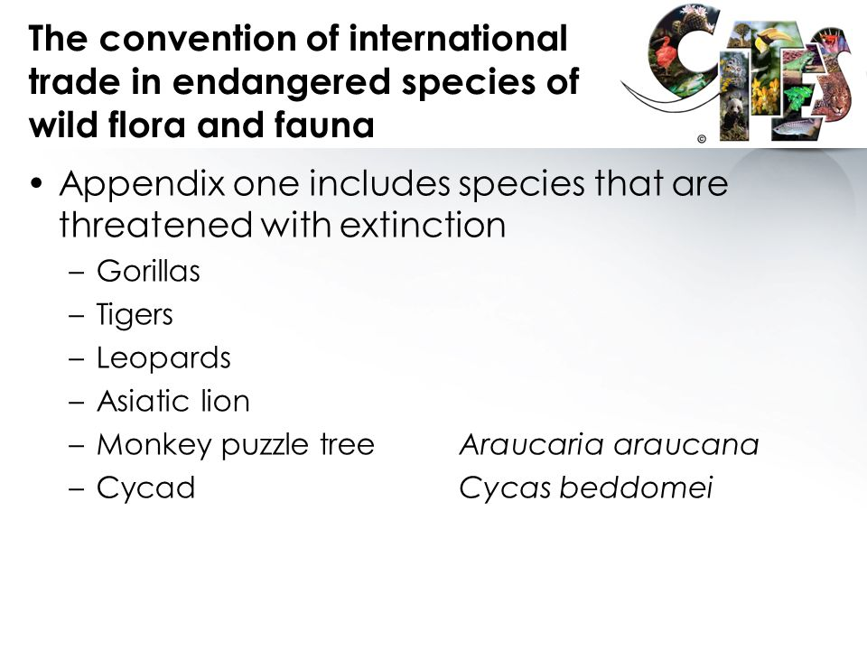 The convention of international trade in endangered species of wild flora and fauna