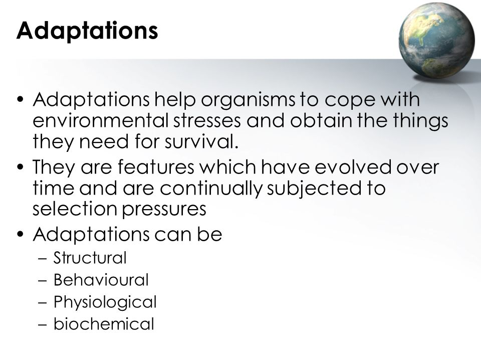 Adaptations Adaptations help organisms to cope with environmental stresses and obtain the things they need for survival.
