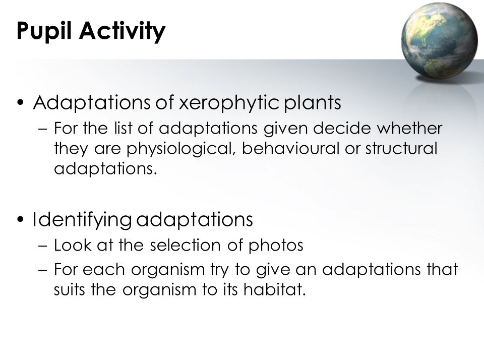 Pupil Activity Adaptations of xerophytic plants