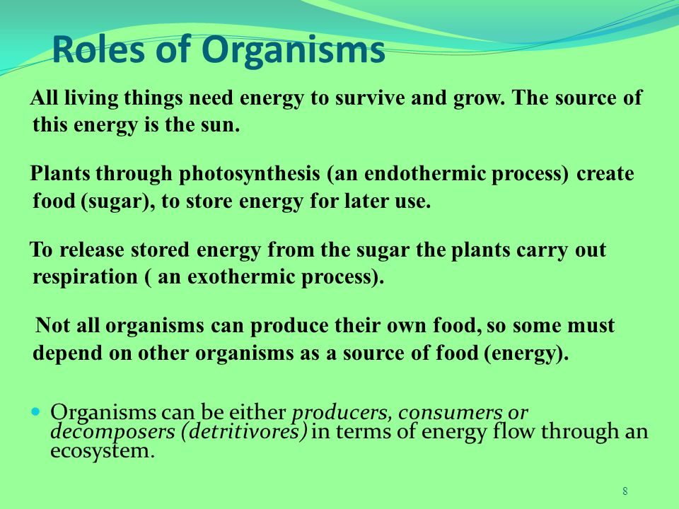 why do living things need energy Every living organism, animals and plants, need a continual supply of energy to perform the processes necessary for reproduction and survival some of the processes like metabolism occur continually, while others only occur at certain times, like muscle contractions and cellular movements living.