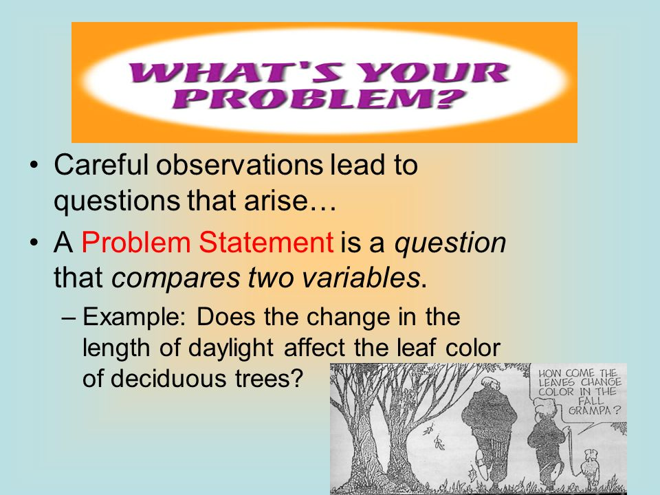 Careful observations lead to questions that arise…