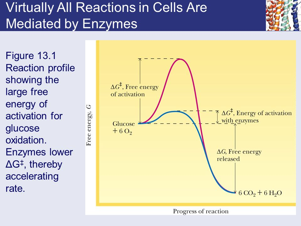 chapter 13 enzyme kinetics ppt video online download rh slideplayer com Enzyme Cofactors Enzyme Chemical Reaction