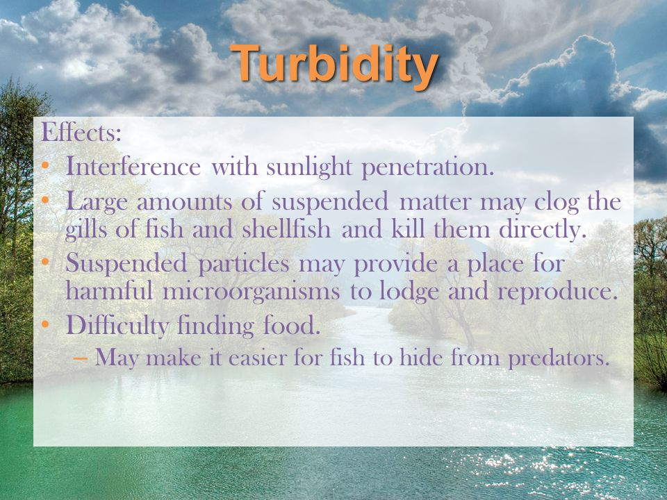 Turbidity Effects: Interference with sunlight penetration.