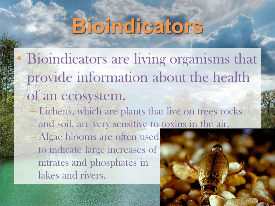 Bioindicators Bioindicators are living organisms that provide information about the health of an ecosystem.