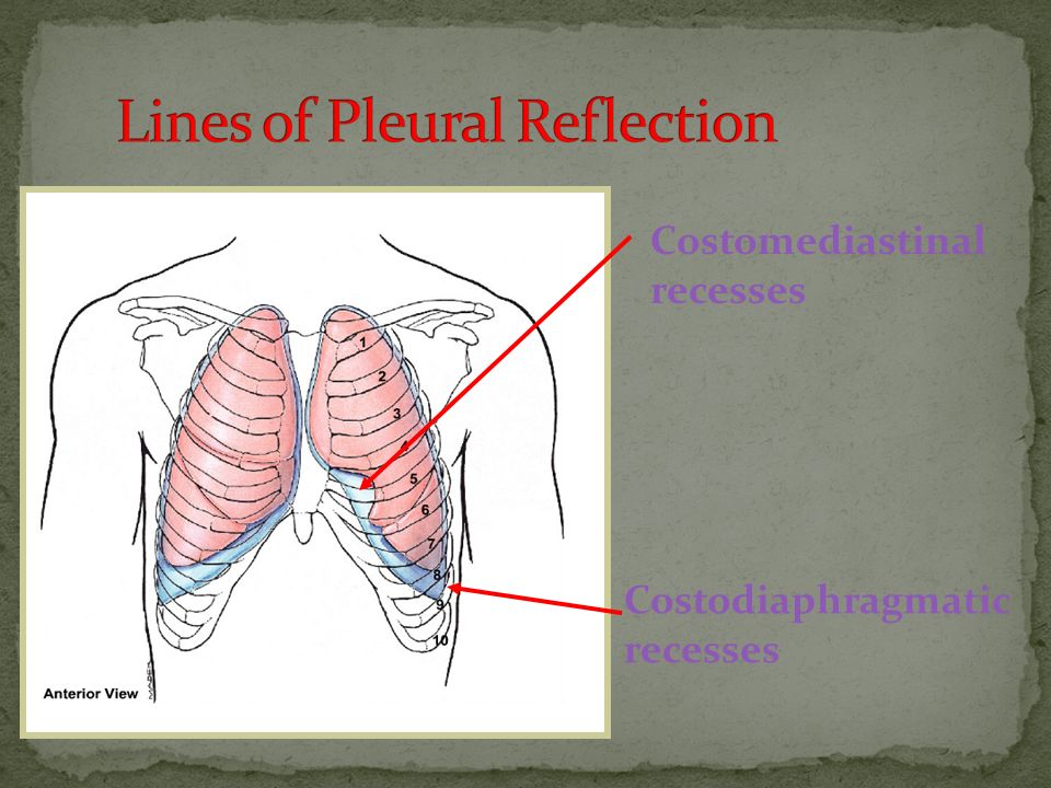 Lines of Pleural Reflection