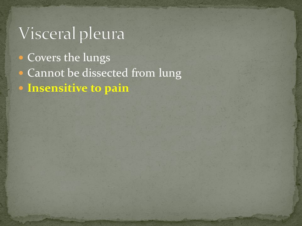 Visceral pleura Covers the lungs Cannot be dissected from lung