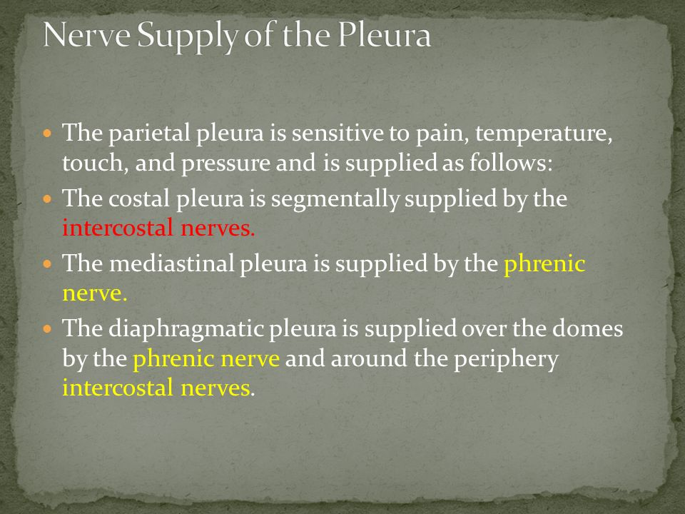 Nerve Supply of the Pleura