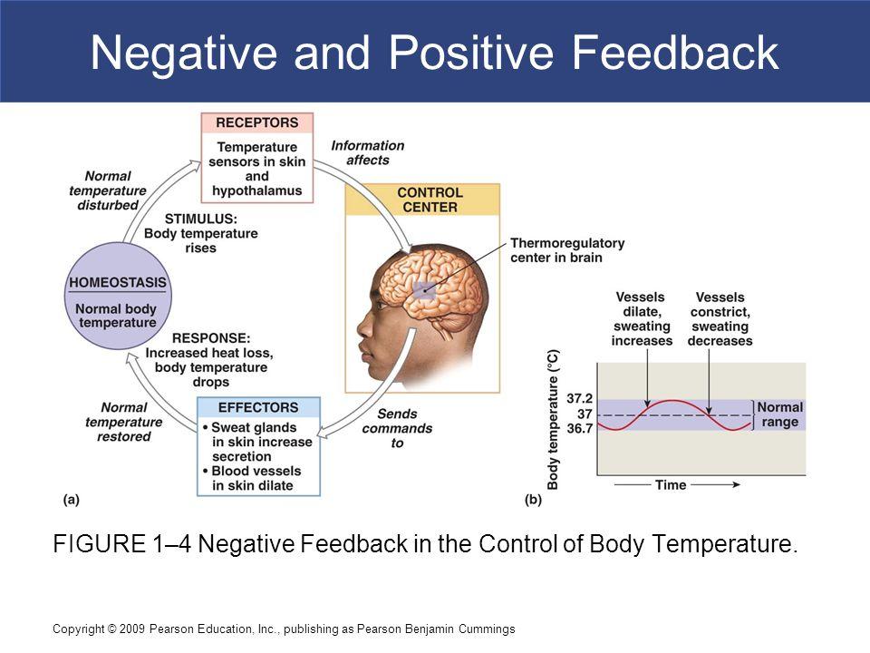 Positive Feedback Temperature Body Organs Diagram - Circuit ...