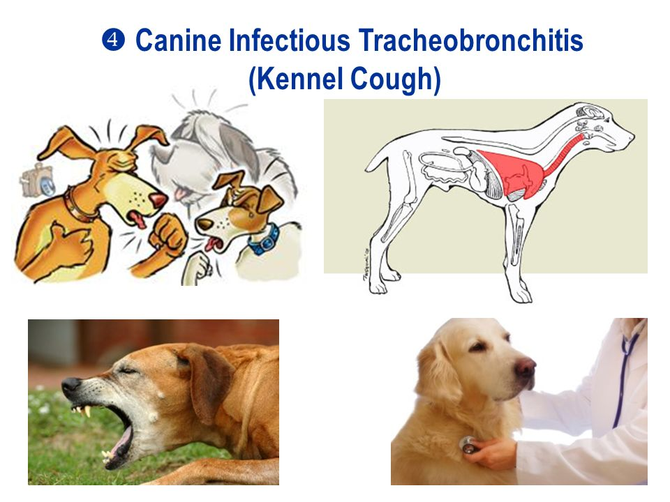 Antiviral Drugs Treatment of Selected Canine and Feline