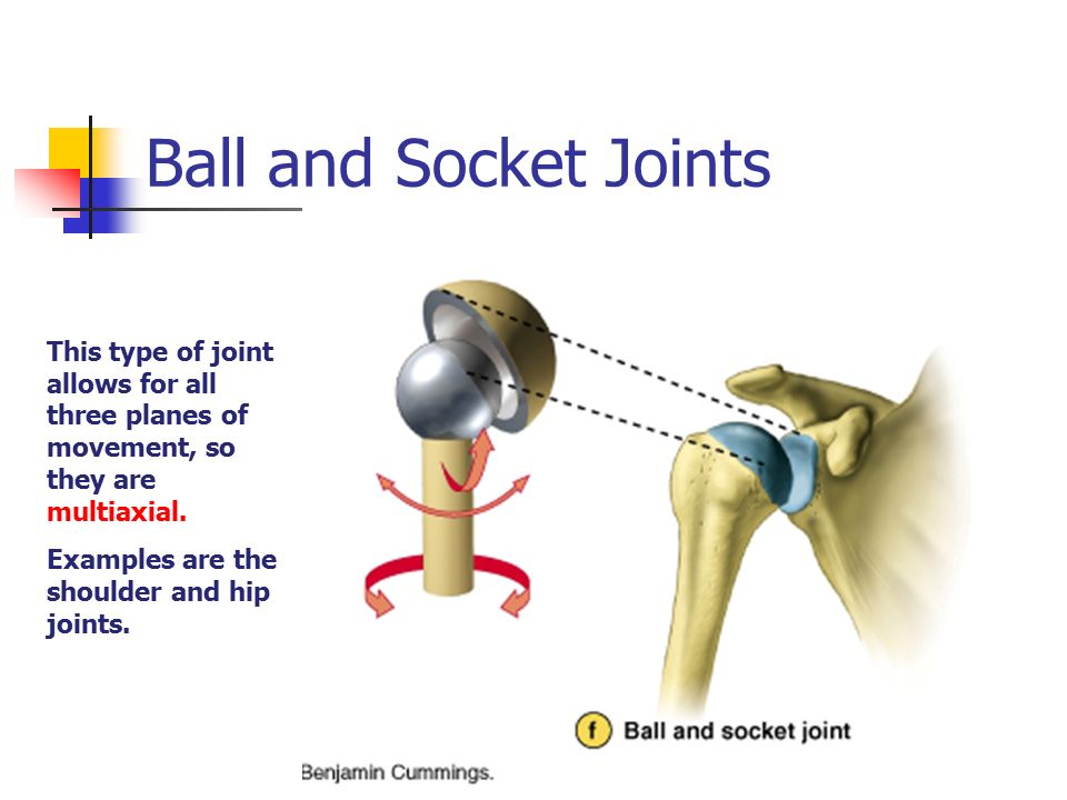 Joints And Articulations Ppt Video Online Download