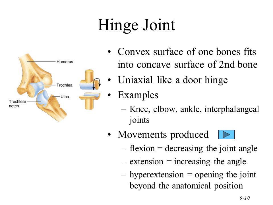 Chapter 9 Joints Joints hold bones together but permit movement ...