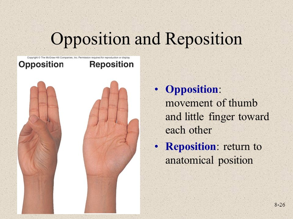 Nice Opposition In Anatomy Adornment - Anatomy And Physiology ...