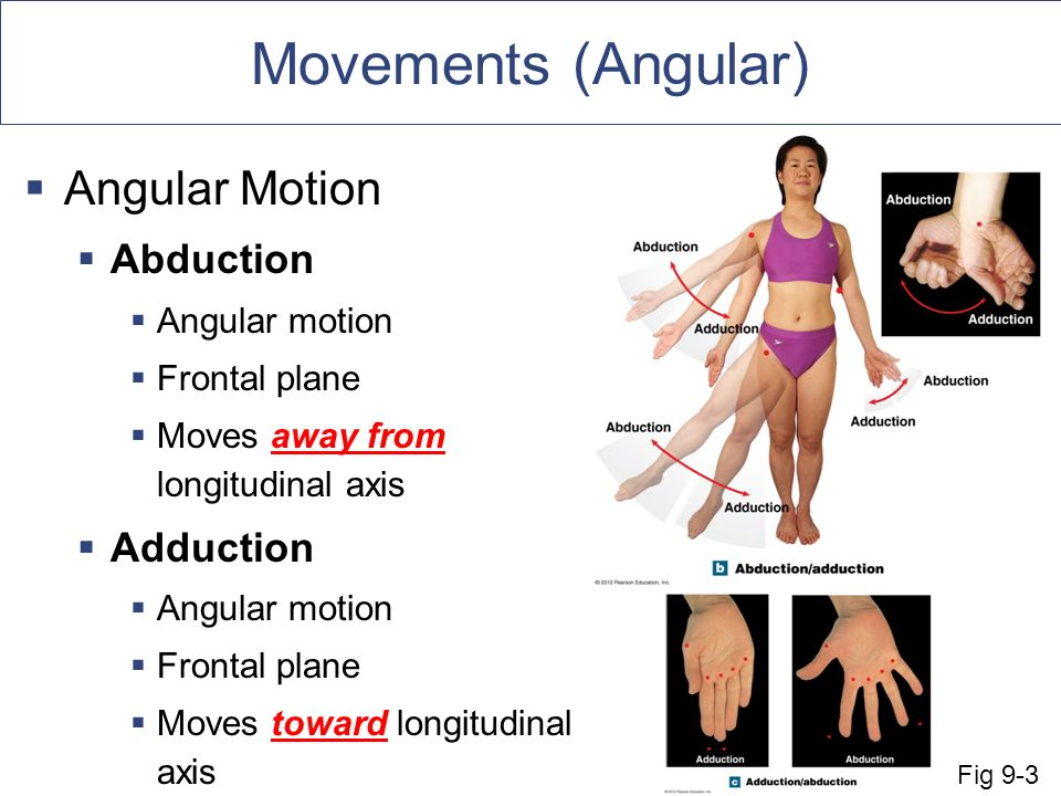 An Introduction to Articulations Body movement occurs at joints ...
