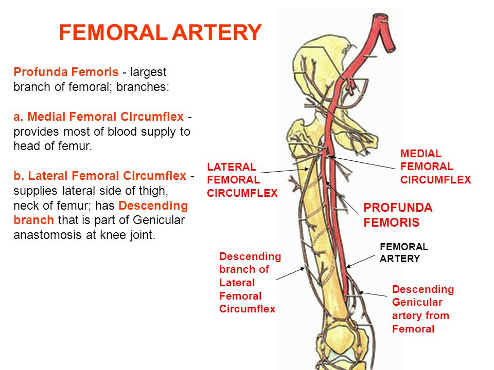 Review Of Lower Extremity For Board Ppt Video Online Download