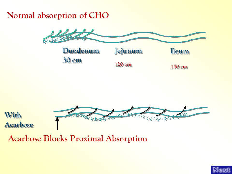 Normal absorption of CHO
