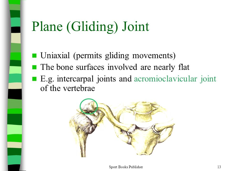 Joints of the Human Body - ppt video online download