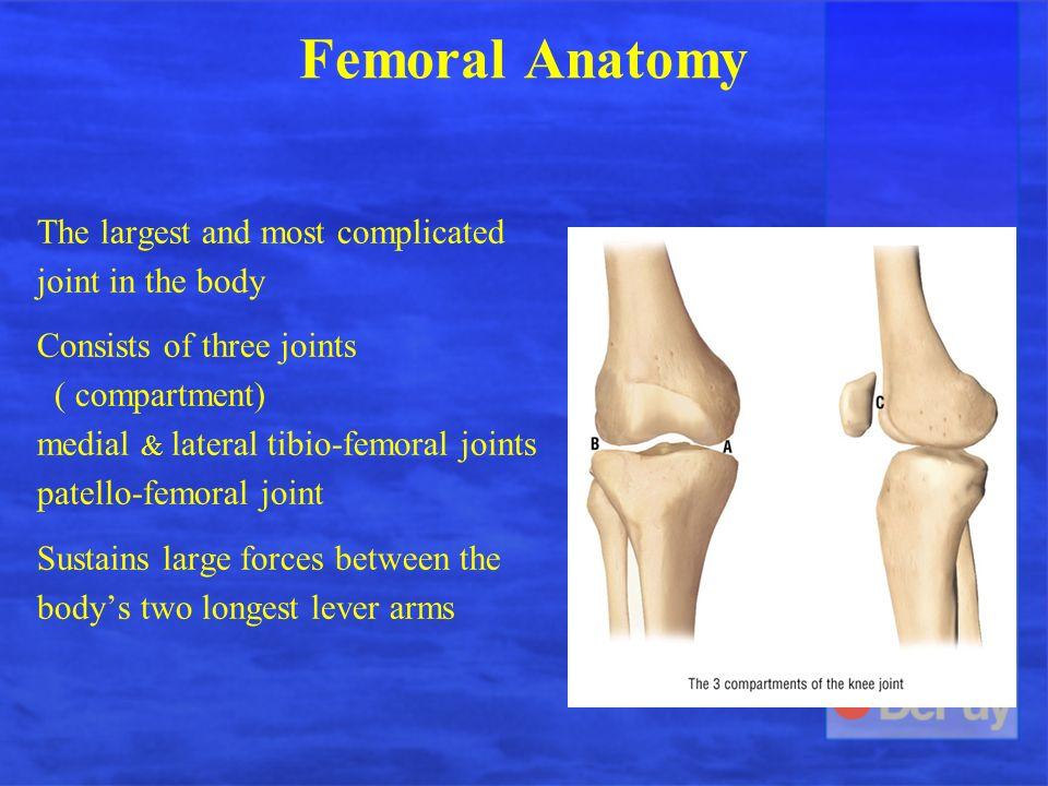 Anatomy Biomechanics Kinematics Of The Knee Ppt Video Online