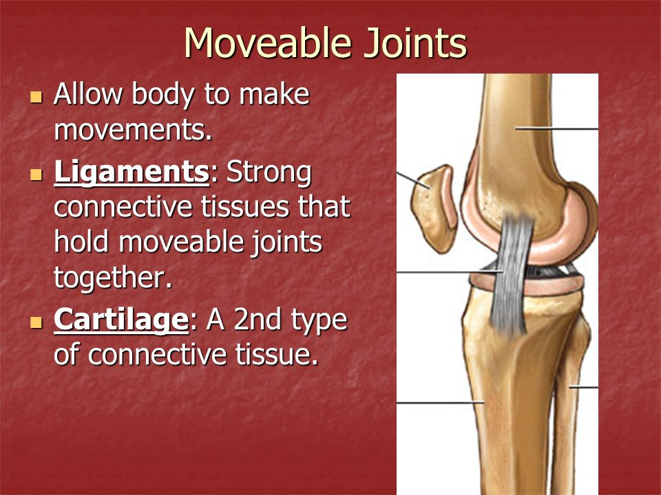 Moveable Joints Allow body to make movements.