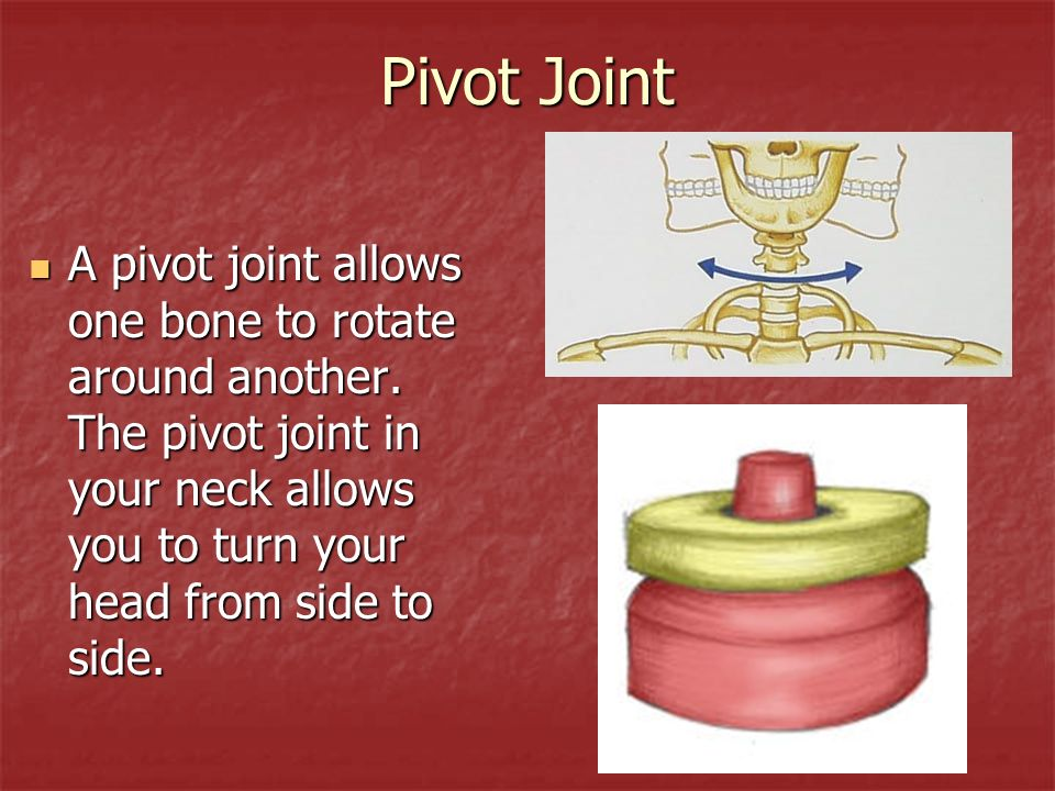 Pivot Joint A pivot joint allows one bone to rotate around another.