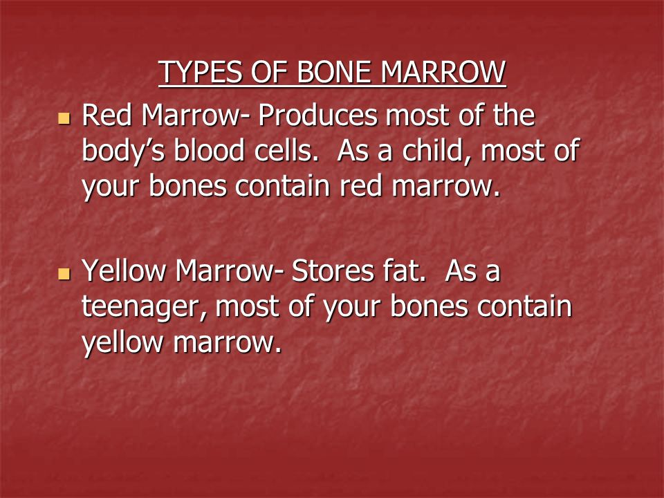 TYPES OF BONE MARROW Red Marrow- Produces most of the body's blood cells. As a child, most of your bones contain red marrow.
