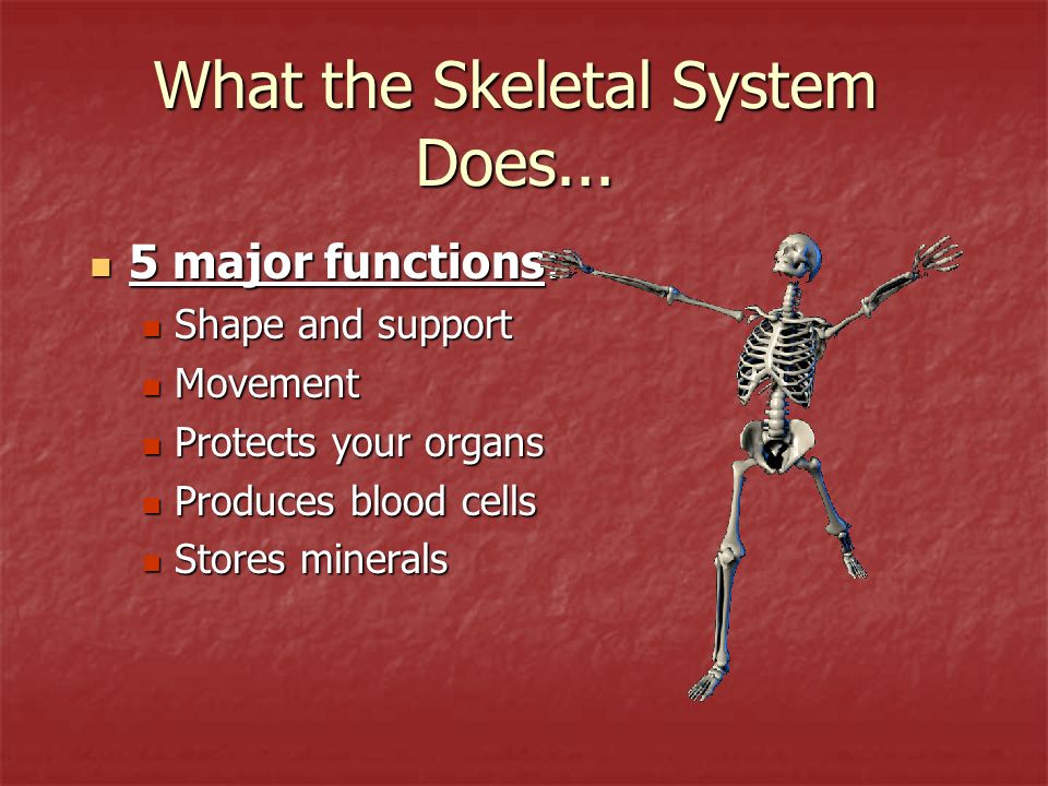 What the Skeletal System Does...