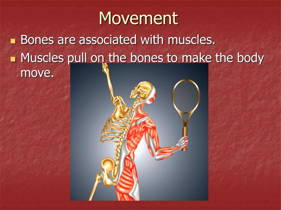 Movement Bones are associated with muscles.