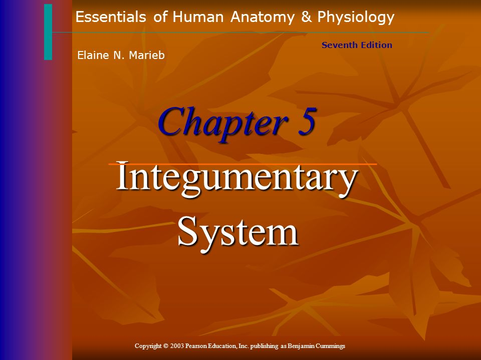 Chapter 5 Integumentary System - ppt download