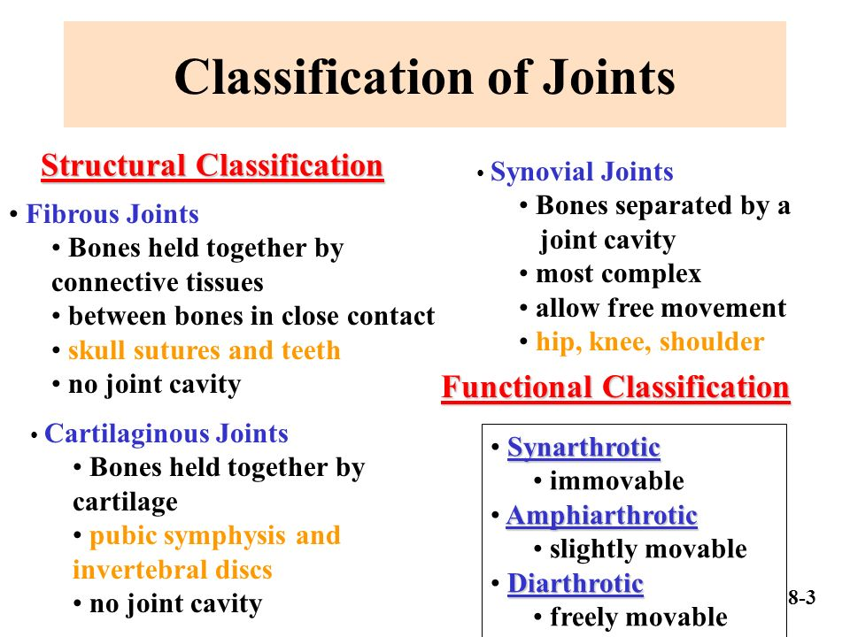 Classification Of Joints on 4 Parts Of A Synovial Joint