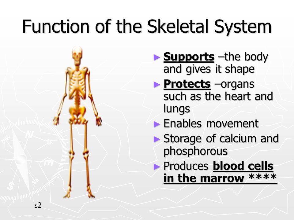 The Human Skeletal System - ppt video online download