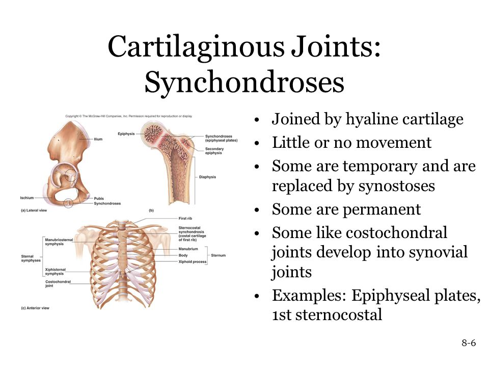 Articulations Or Joints Ppt Video Online Download There are two ways to categorize joints. articulations or joints ppt video