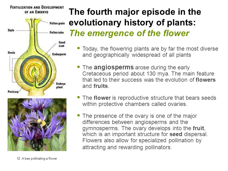 The fourth major episode in the evolutionary history of plants: The emergence of the flower