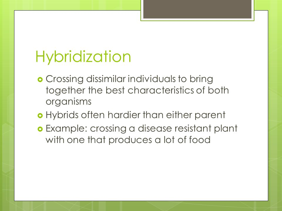 Hybridization Crossing dissimilar individuals to bring together the best characteristics of both organisms.