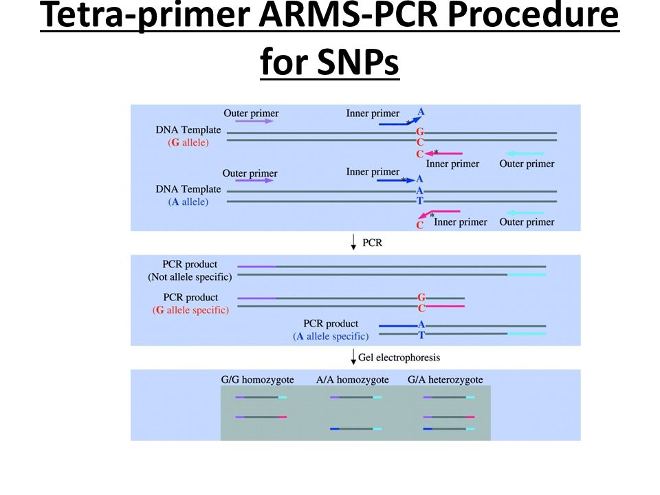 Tetra-primer ARMS-PCR Procedure for SNPs
