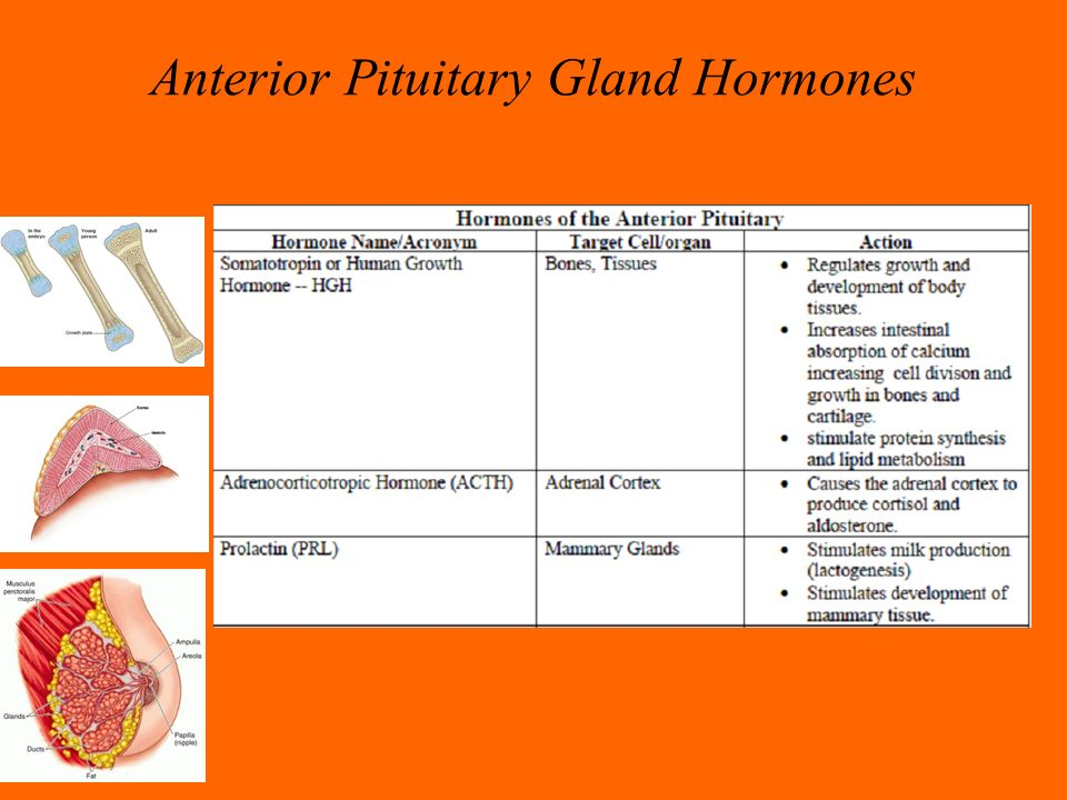 The Endocrine System Ppt Video Online Download