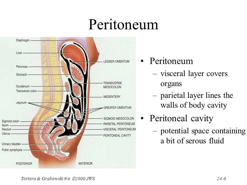 Peritoneal Body Cavity Diagram Anatomy Online Schematic Diagram