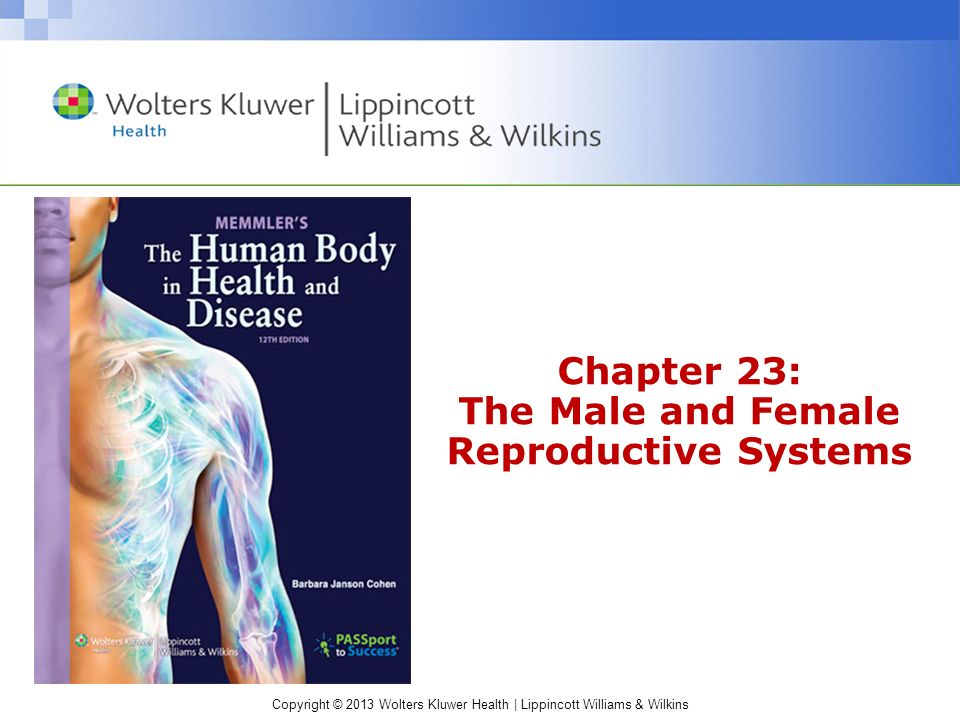 Chapter 23: The Male and Female Reproductive Systems - ppt video ...