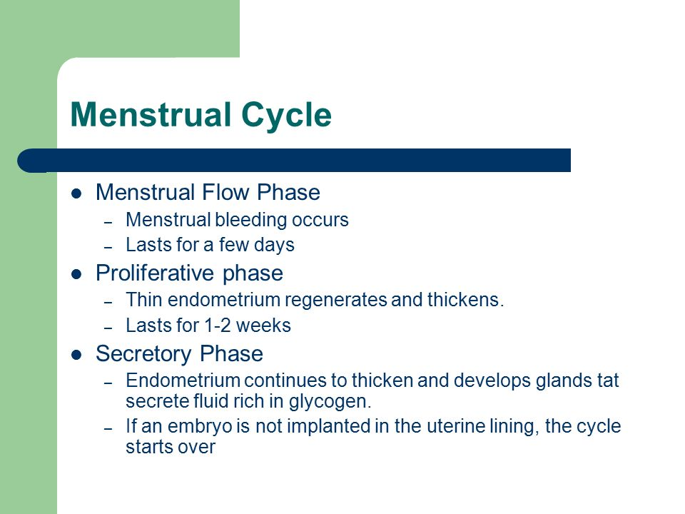 during the secretory phase of the menstrual cycle ________