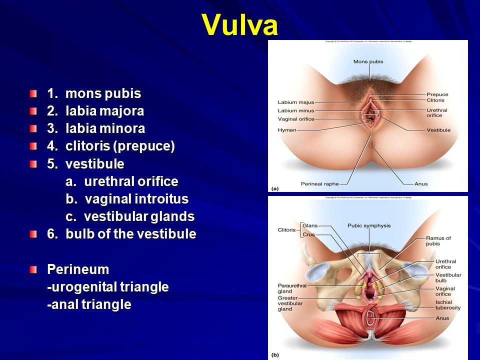 The Bacterial Flora Of The Vaginal Vestibule, Urethra And Vagina In The Normal Premenopausal Woman