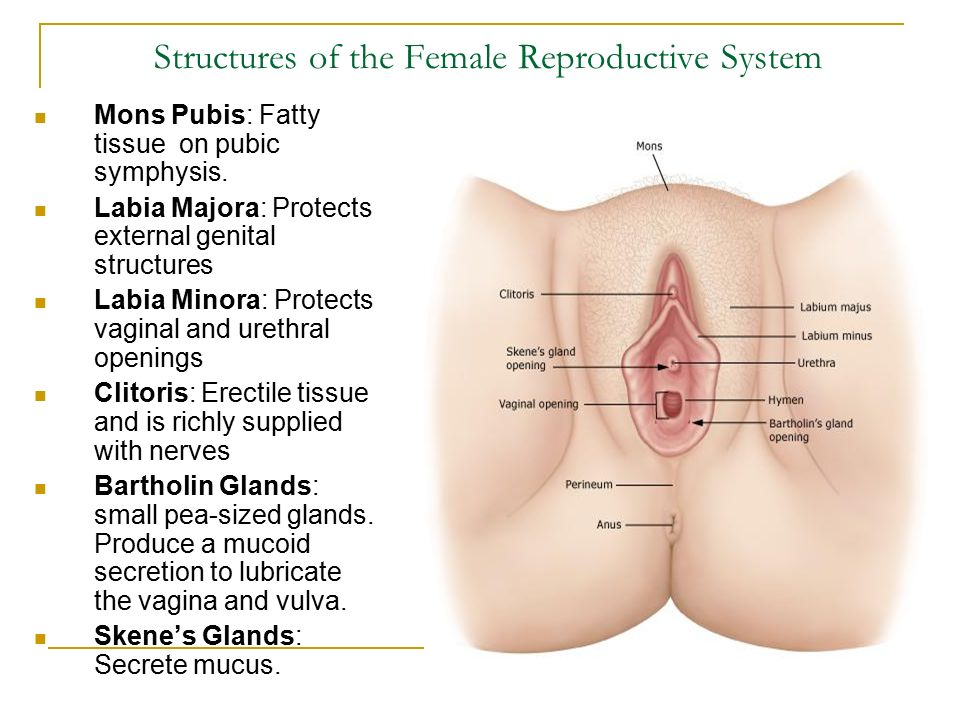 Cervical Cancer Overview Nccc