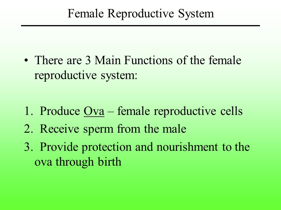 Chapter 19 Female Reproductive System Ppt Download