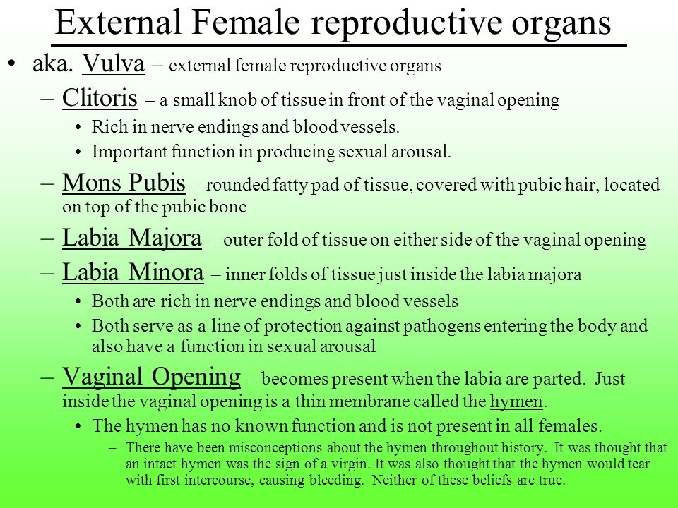CHAPTER 19 FEMALE REPRODUCTIVE SYSTEM - ppt download