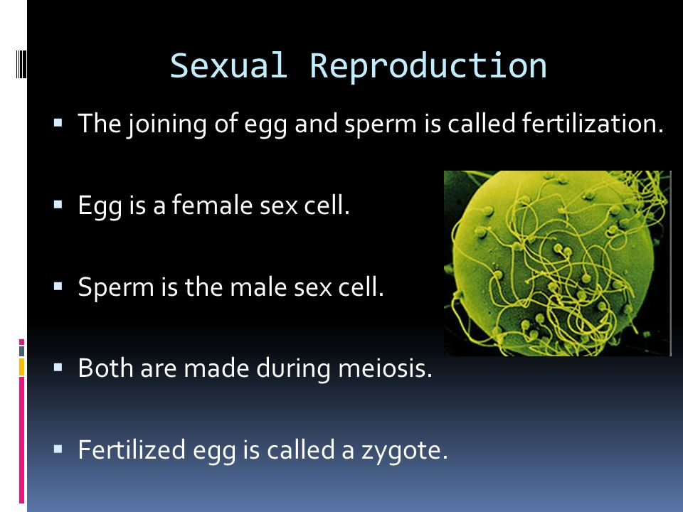 What is the female sex cell called
