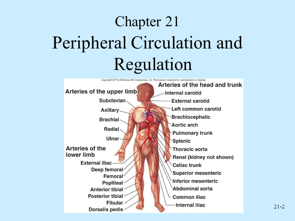 Anatomy and Physiology, Sixth Edition - ppt video online download
