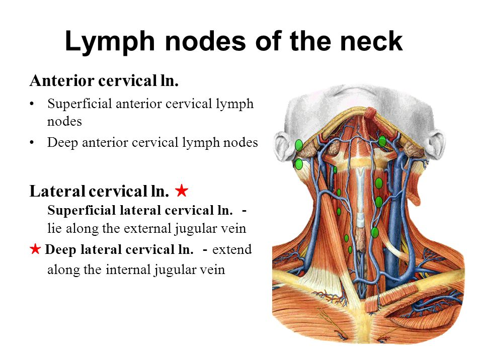 The Lymphatic System Consists Of The Lymph Conducting Channels Ppt