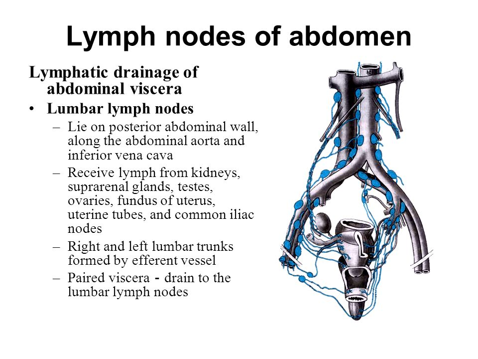 The lymphatic system consists of the lymph conducting channels ppt 53 lymph ccuart Gallery