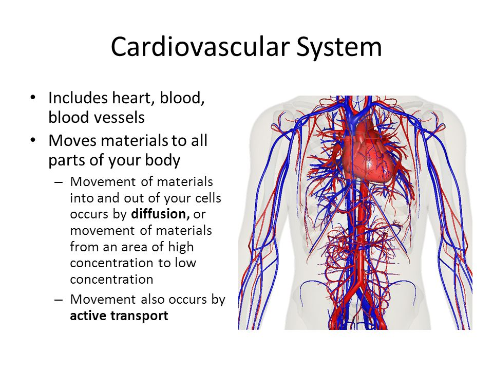 Circulatory System Ppt Video Online Download